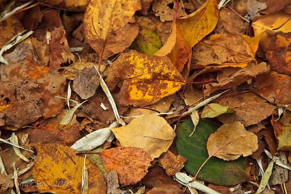 Autumn_Leaves_3 222