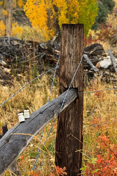 Barb_Wire_Fence 222