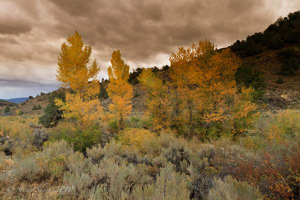 Fall_Colors 222