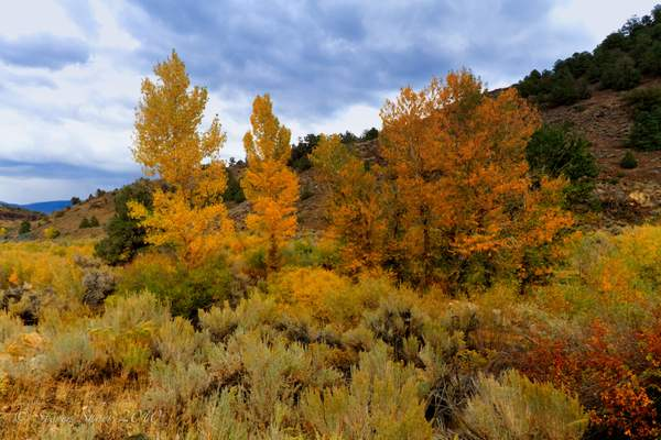 Fall_Color_2 222
