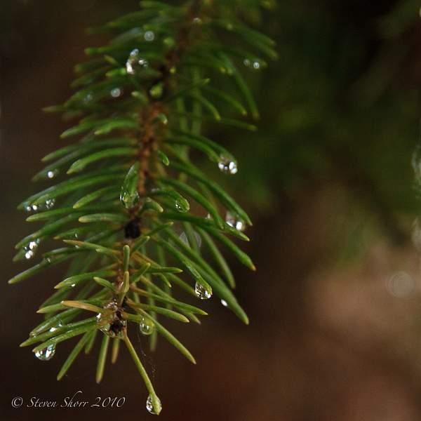 Raindrops 3 222
