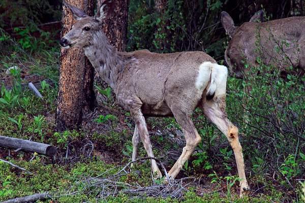 Oh, Deer 222