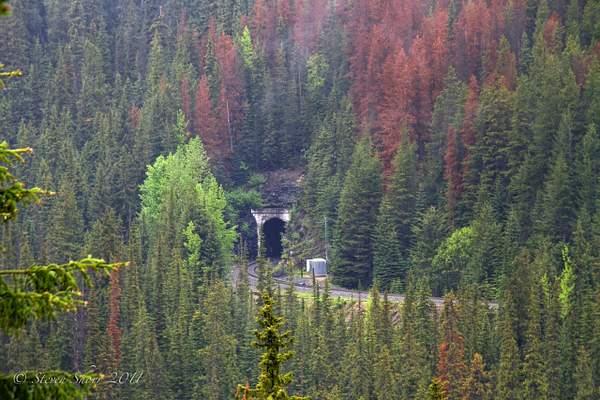 Lower Spiral Tunnel 222