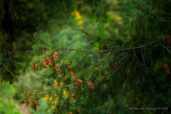 Yosemite 2012-41 222