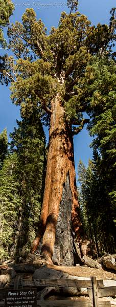 Yosemite 2012-44 222