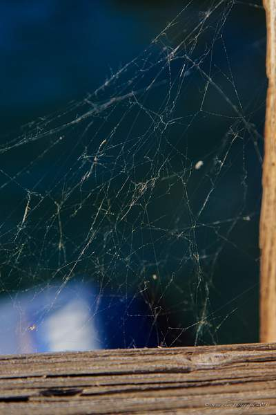 Spider Web at Goat Haunt, Montana 222