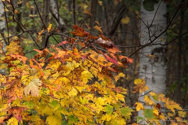 New Hamshipire Fall Colors-10 222