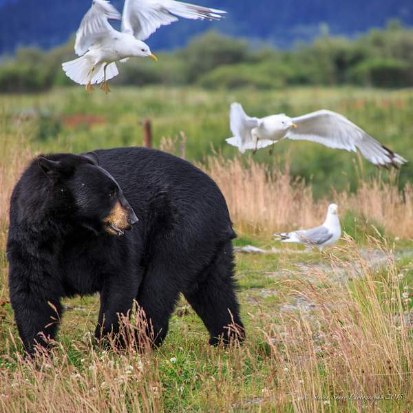 Black Bear and Friends 222
