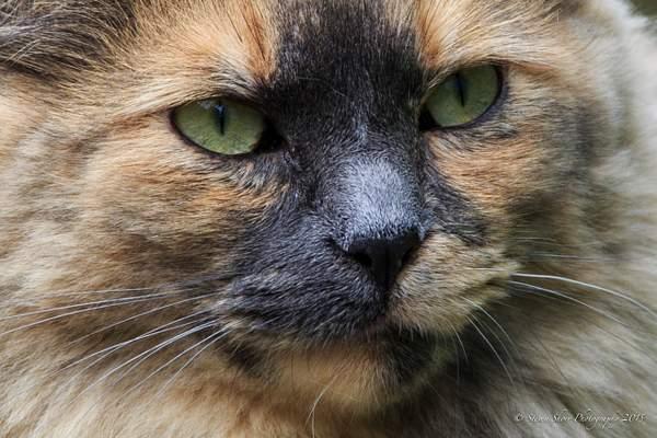Ketchikan Cat 222
