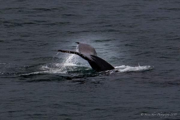 Whale Ho! 222