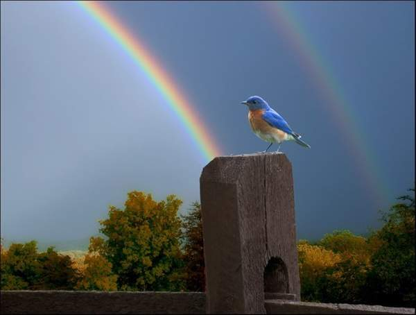 The_world_awakens-Notice-bird_s_color_and_rainbow_match