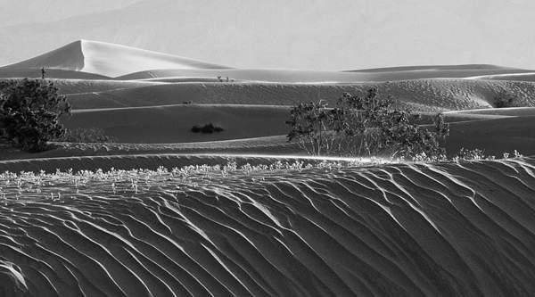 Dunes 2.jpg 222
