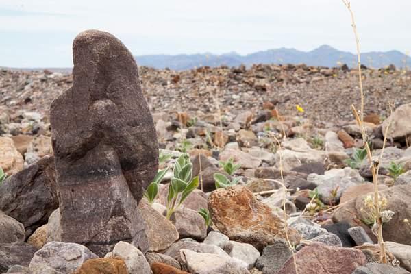 Desert.jpg 222