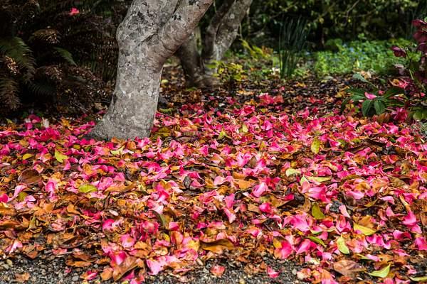 Mendocino Coast Botanical Garden.jpg 222