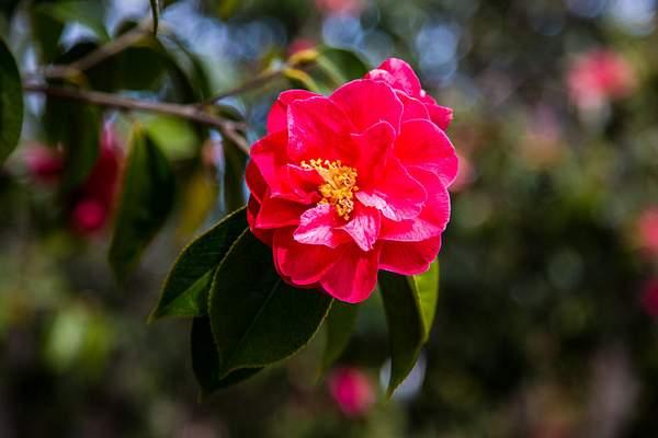 Mendocion Coast Botanical Garden-2 222