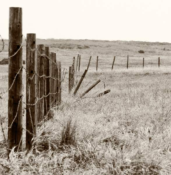 Old Fence in Fiscalini Ranch Preserve (since removed).jpg 222