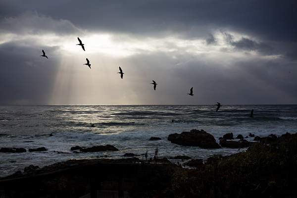 Pelicans & Clearing Storm Couds.jpg 222