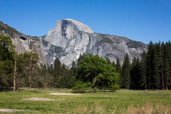 Half Dome from Meadow on Northside Drive.jpg 222