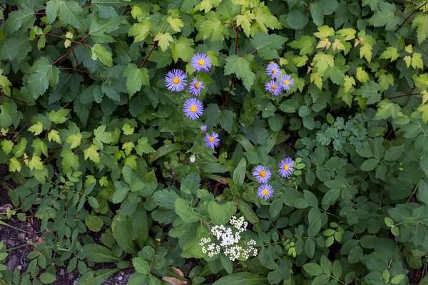 July Wild Flowers In Glacier.jpg 222