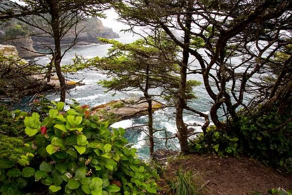Cape Flattery in Neah Bay 3.jpg