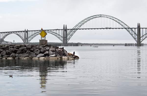 Jetty Seals & Bridge in Newport OR.jpg