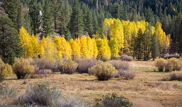 Fall Colors on June Lake Loop.jpg