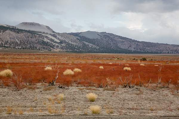 Red Grass in High Desert.jpg 222
