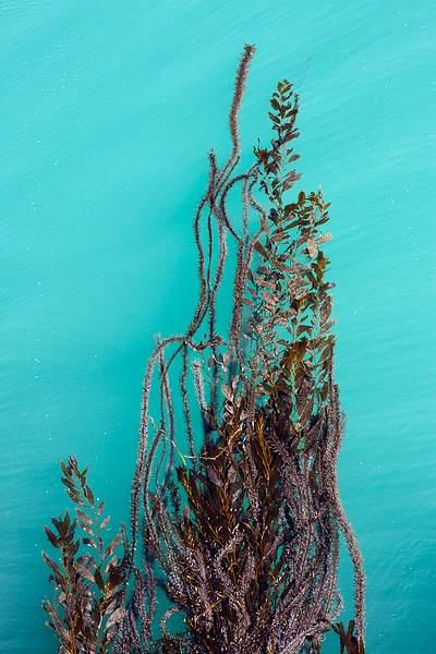 San Simeon Pier Seaweed-1.jpg 222