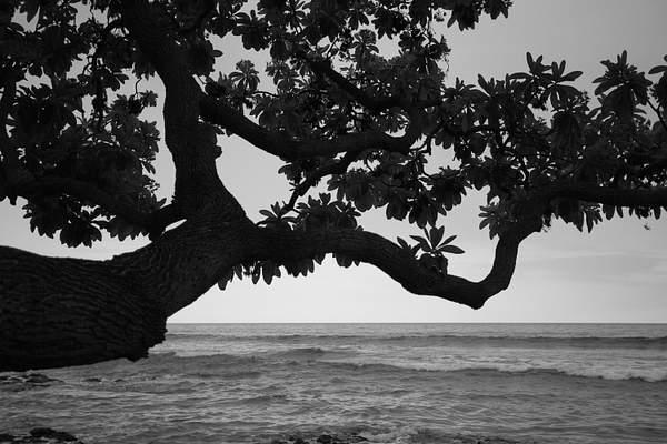 Puako Shore, Big Island.jpg