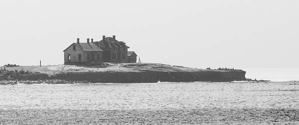 Old Sea lions Home on Año Nuevo Island.jpg