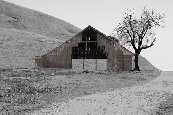 Point Reyes Barn and Tree-Edit.jpg