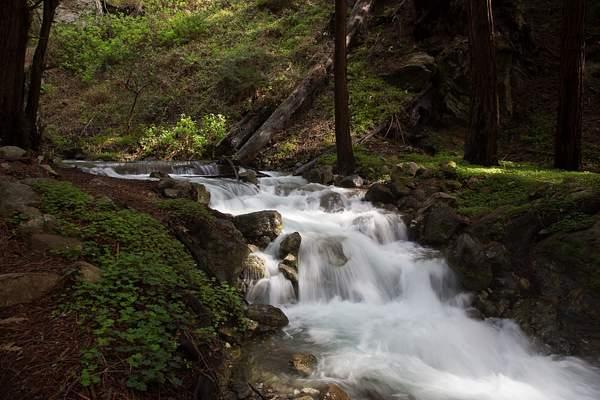 Limekiln State Park-14 222