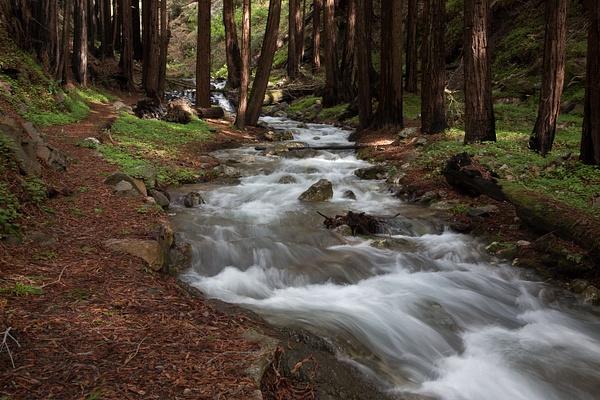 Limekiln State park by Harrison Clark