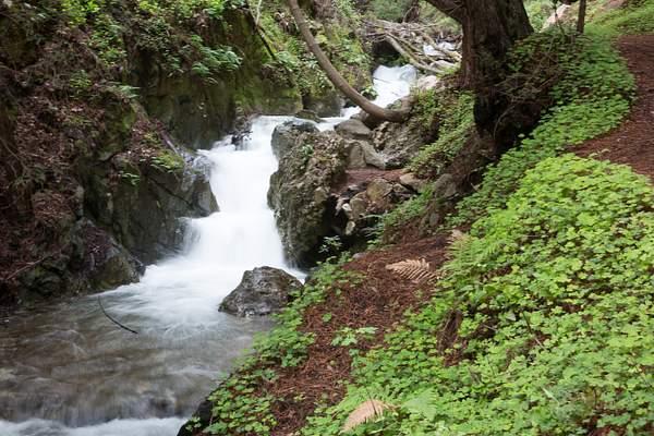Limekiln State Park-7 222