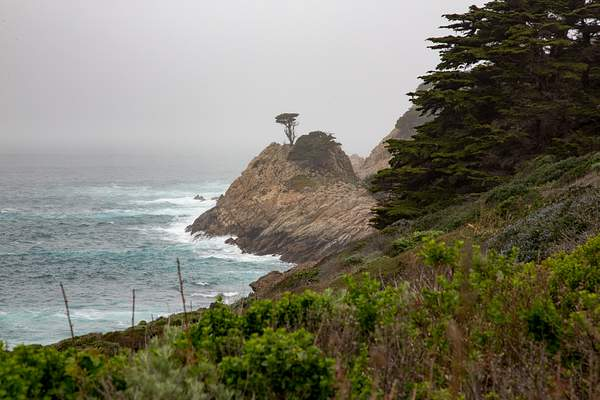 Point Lobos-24 222