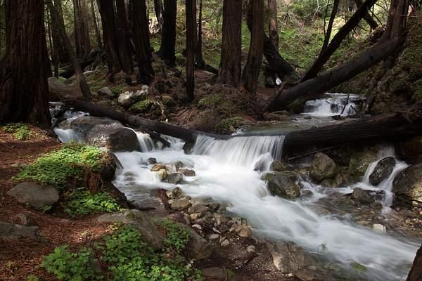Limekiln State Park-6 222