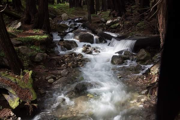 Limekiln State Park-5 222