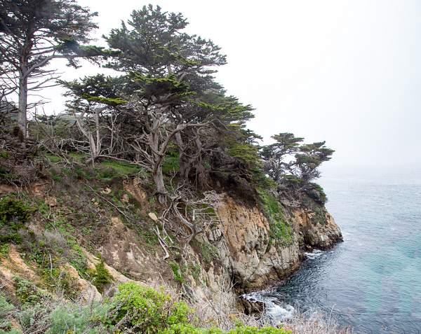 Point Lobos-21 222