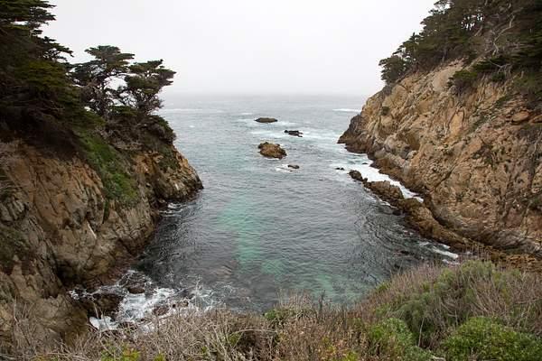 Point Lobos-20 222