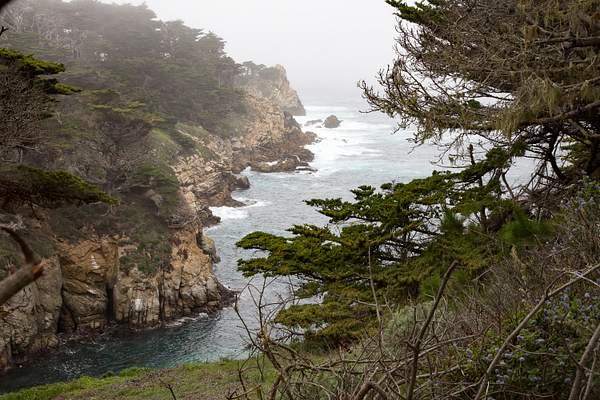 Point Lobos-18 222