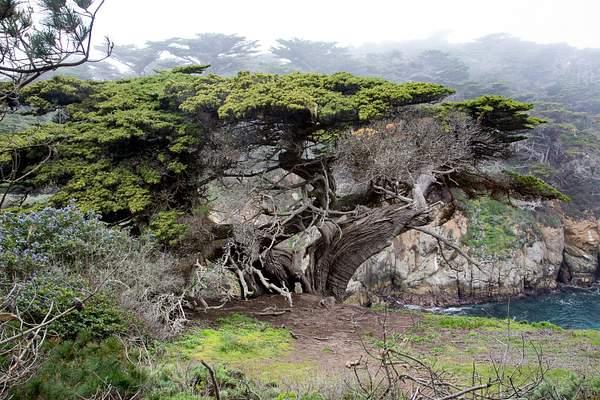 Point Lobos-17 222