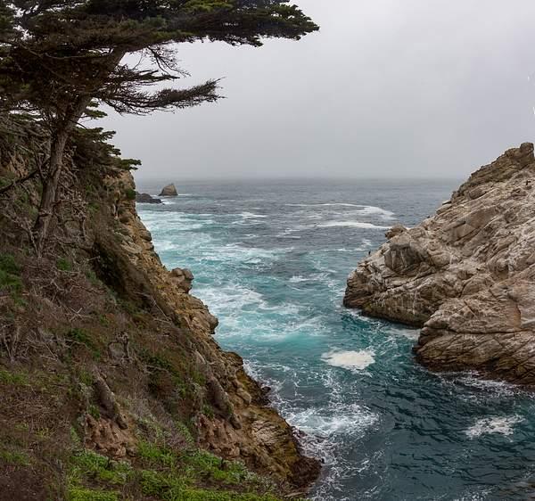Point Lobos-15 222