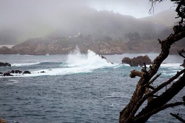 Point Lobos-14 222