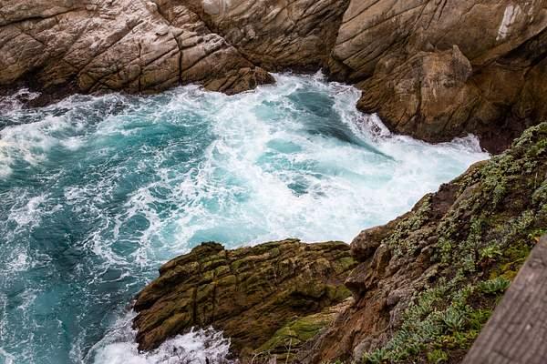 Point Lobos-13 222