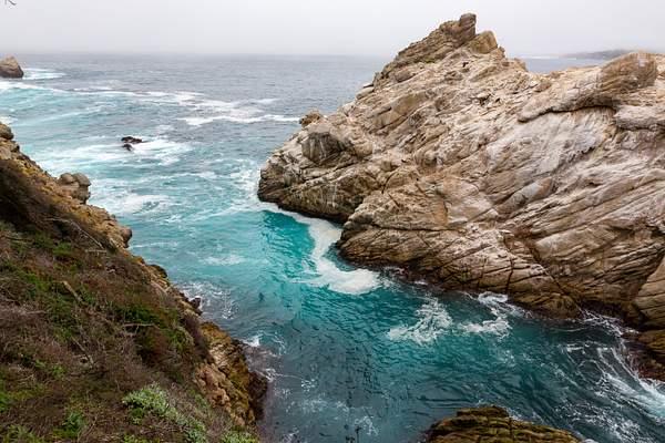 Point Lobos-12 222