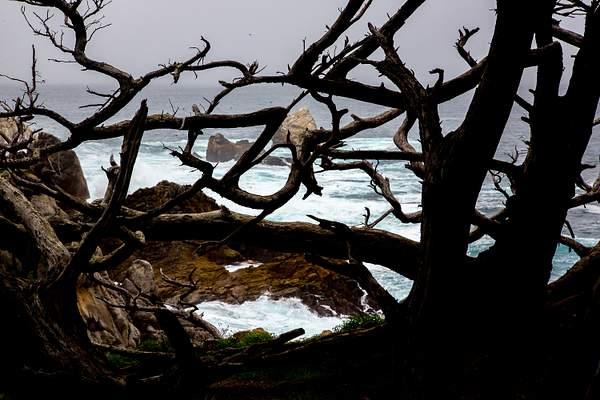 Point Lobos-11 222