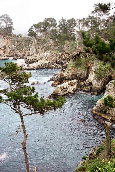 Point Lobos-10 222