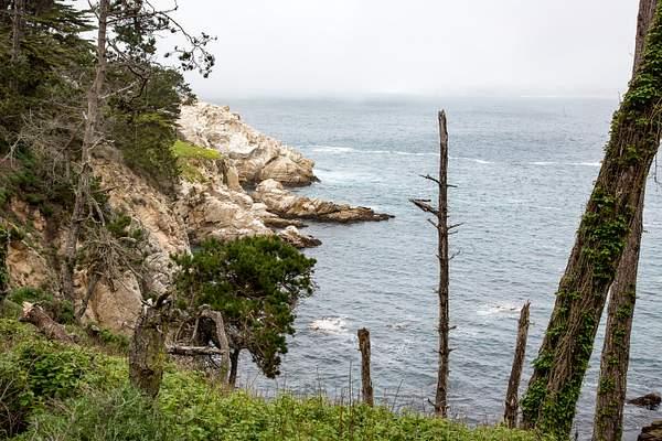 Point Lobos-7 222