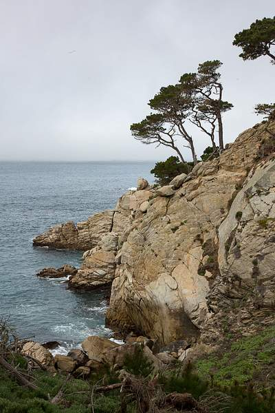 Point Lobos-6 222