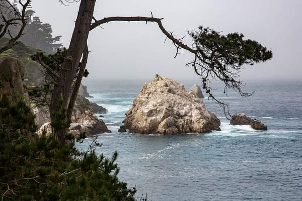 Point Lobos-5 222